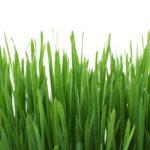 Ein Profi-Rasen für Daheim!